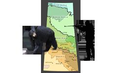 saskatchewan-bear-hunting